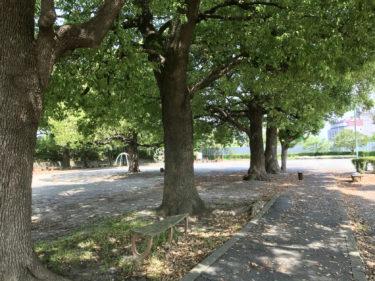 【領家中央公園|さいたま市北区】珍しい巨大シーソーと健康器具がある公園