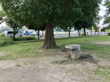 【本郷第5公園|さいたま市北区】適度に広くて、美しい形の木がある公園