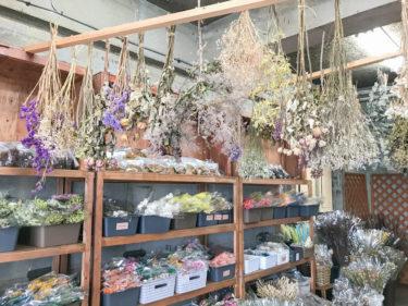 埼玉県でドライフラワー買うなら「大宮フラワーセンター」が激安でおすすめ!生花も安い!
