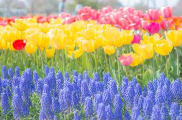 「大宮花の丘農林公苑」さいたま市の知られざるおすすめスポット!子連れにとっても癒し空間。